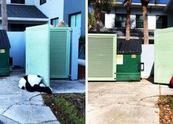Эта панда была выброшена в мусорку, но неравнодушные люди спасли её (11фото)
