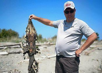 Загадочное существо с «зубастым» хвостом вынесло на побережье (3фото)