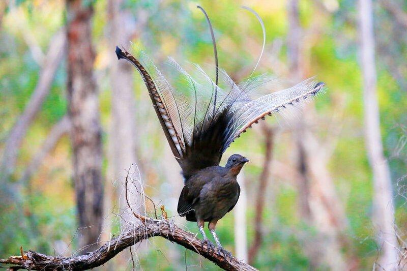 птицы с фото и названием звуки издают видеть
