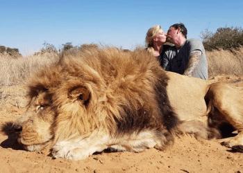 Целующиеся на фоне убитого льва канадцы разгневали защитников природы (5фото)