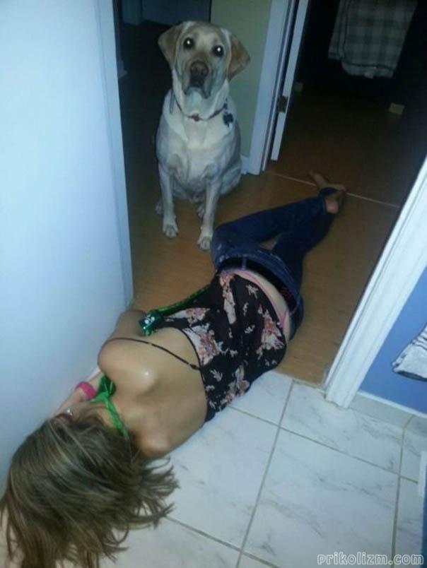 Собака в шоке от пьяной хозяйки