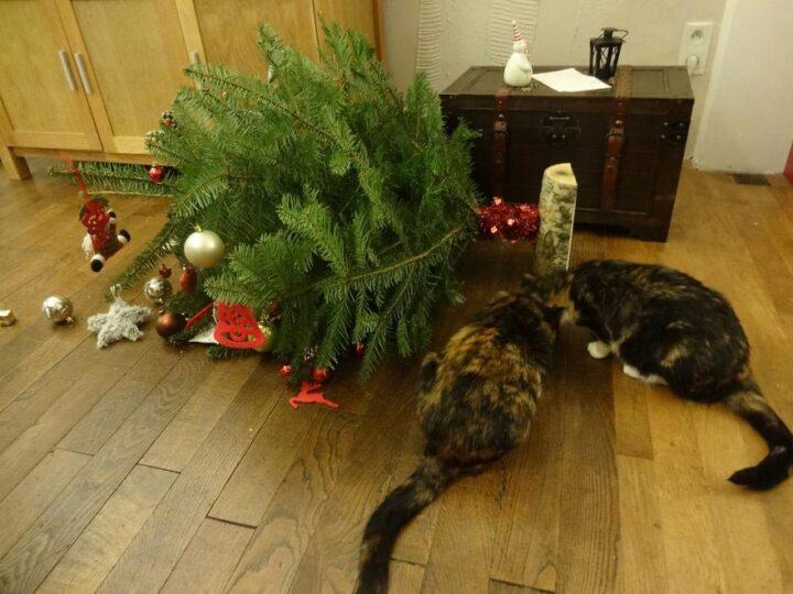 Не успели поставить елку, как коты решили ее поправить