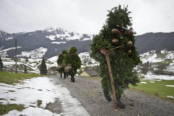 Странные елки идут по дороге с гор